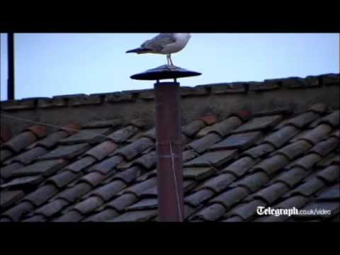Vatican seagull becomes most watched bird in the world