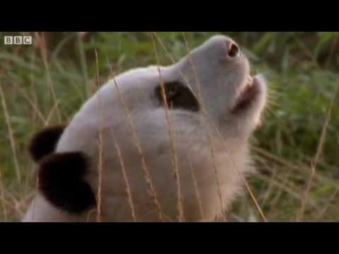 utube funny animal videos. Funny Animal Videos!