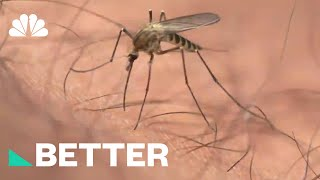 Protect Yourself From Zika This Summer With These Tips | Better | NBC News - NBCNEWS