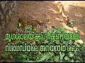 നിശാഗന്ധിയിലെ അനിയന്ത്രിത ശബ്ദം മൃഗശാലയ്ക്ക് ഭീഷണി : Chuttuvattom News