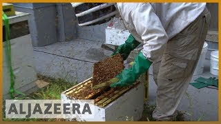 🐝 Meet the man who takes care of honeybees on Chicago's skyscrapers | Al Jazeera English - ALJAZEERAENGLISH