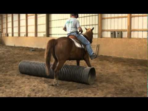 Longmeadow Horsemanship Training Program: Leg Cues
