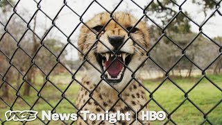 Cheetah Matchmaking & Medicare For All: VICE News Tonight Full Episode (HBO) - VICENEWS