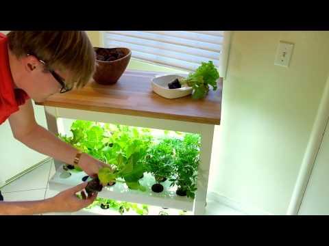 Grow food at home with this Indoor Garden: Click & Grow Robot Garden