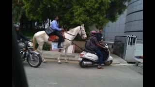 Software Engineer Rides Horse On Last Day Of Office - ABPNEWSTV