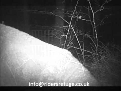 Chalet Cam 6th Jan 2013