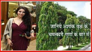 मनोकामना पूर्ति और धन-संपत्ति के लिए अशोक के पेड़ के सबसे अनसुने और असरदार उपाय;Ashoka tree benifits - ITVNEWSINDIA