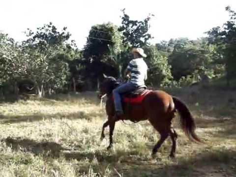 Égua QM 3/4 à Venda!!! Valor: 3.500,00