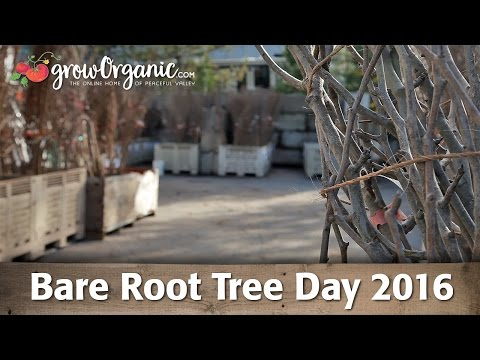 Bare Root Tree Day 2016