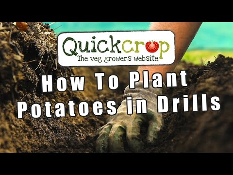 How To Plant Potatoes In Drills