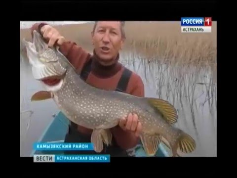 вести с рыбалки