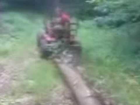 traktor sam zrywka w lesie