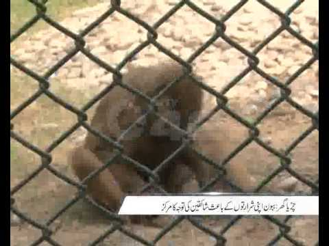 Lahore Zoo Monkey Pkg By Tazeen Malik City42