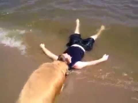 Dog Saves Child (kid pretends to be drowning)
