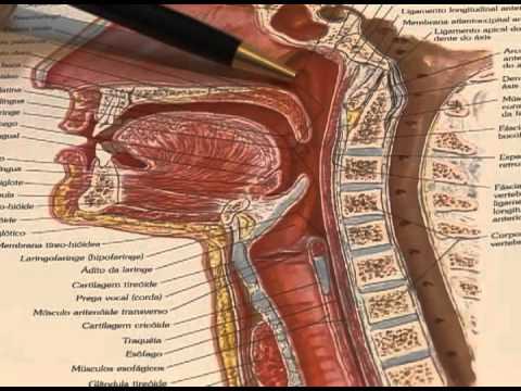 CMHoje 254 - Tudo sobre adenoide