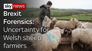 Brexit Forensics: Impact on Welsh lamb exports - SKYNEWS