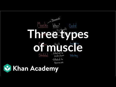 Three Types of Muscle