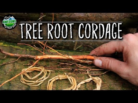 How to make Natural Cordage from Tree Roots | TAOutdoors