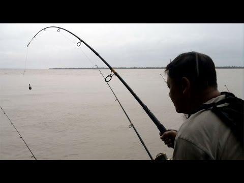 Câu Bông Lau Sông Hàm Luông của Cường5x & A.Ba Liêm và Lương Kỳ ngày 17/07/2014.