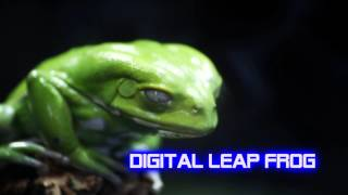 Royalty Free Digital Leap Frog:Digital Leap Frog