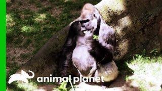 Keeping Animals Well Fed at the Bronx Zoo - ANIMALPLANETTV