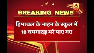 Nipah virus scare in Himachal Pradesh after 18 bats found dead in a government school - ABPNEWSTV