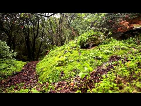 Stock Footage of the lush, green forest floor at Iyon Tanur in Israel.