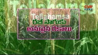 Expert Advice to Choose Right Seeds for Rabi Crops | Raithe Raju | CVR News - CVRNEWSOFFICIAL