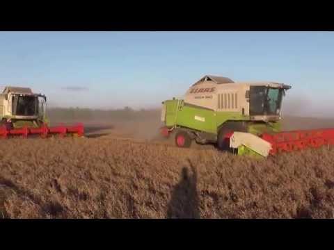 Ютуб выращивание и уборка масличного льна 66