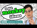 Monkey Idioms - BBC Learning English (The Teacher)
