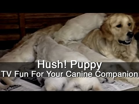 Hush! Puppy - TV Fun For Your Canine Companion