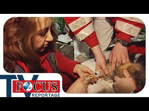 Lebensretter für 4 Pfoten | Tiernotärzte im Einsatz - Focus TV Reportage
