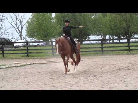 Horse WarmUp desktop