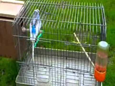 Comment préparer vos oiseaux pour l'accouplement