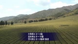 체감 기상정보[꽃가루농도위험지수]