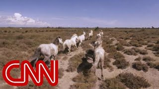 Running with France's wild horses - 360 Video - CNN