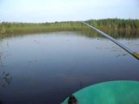 ловить карася летом на пруду