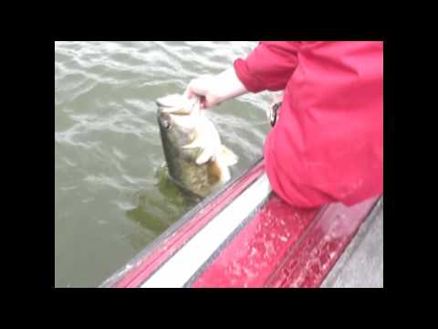 Two Giant Largemouth Bass 10 lb. pounders Caught at Falcon Lake