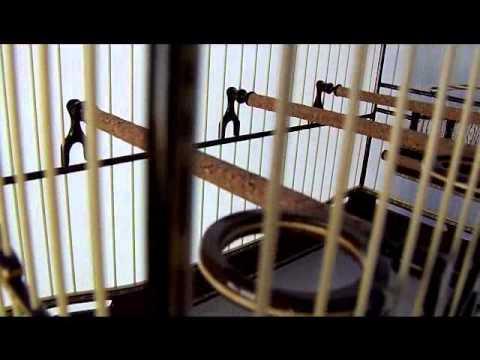 gaiolas do neroli (cerá)  gaiola para coleiro e papa capim