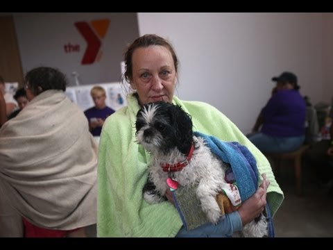 Tips for Preparing Your Dog for a Hurricane With Victoria Stilwell