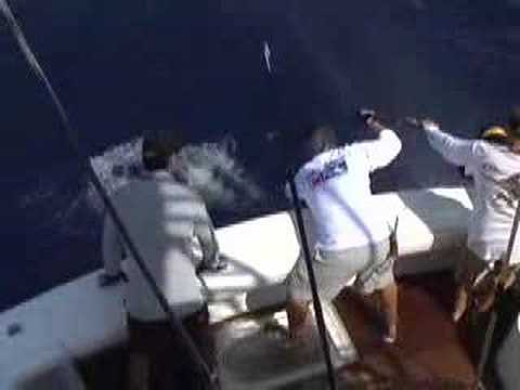 BIG SWORDFISH ON THE GET LIT with Capt. QUINTON