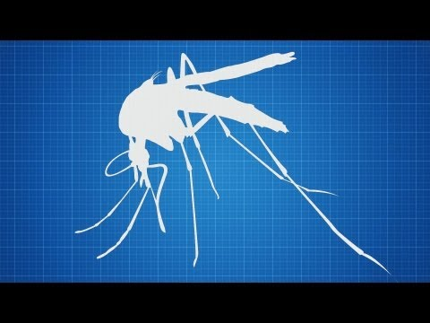 Hadyn Parry: Re-engineering mosquitos to fight disease