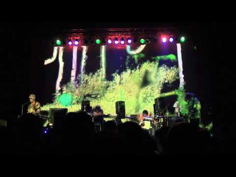 Animal Collective live