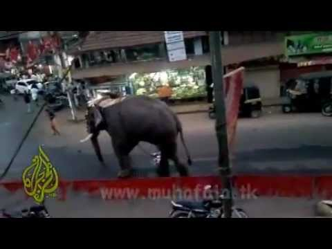 dangerous Elephant attack at kizissery kerala