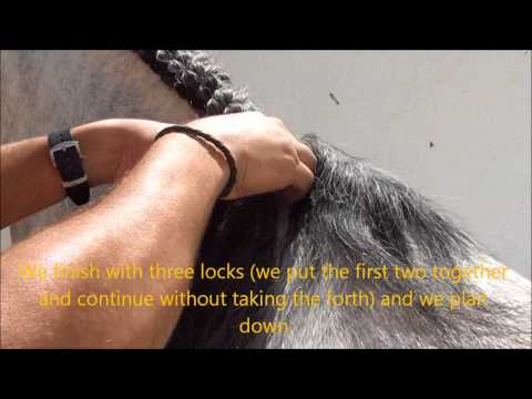 How to braid an Andalusian horse mane. Como trenzar un caballo