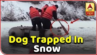 Dog trapped in snow rescued by team. - ABPNEWSTV