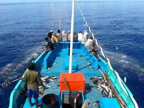 Mancing Ikan Cakalang Inkamina 284 Ternate