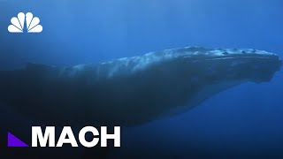 Can Drones Save whales Trapped In Fishing Gear? | Mach | NBC News - NBCNEWS