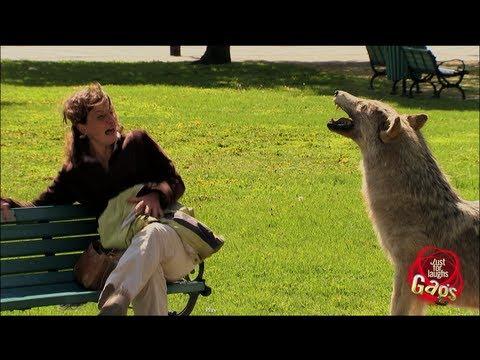 تمثال كلب مفاجئ يظهر من لامكان