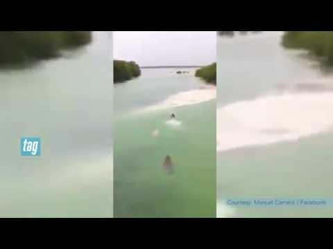 Cocodrilo persigue a turista en Boca Paila en La Riviera Maya